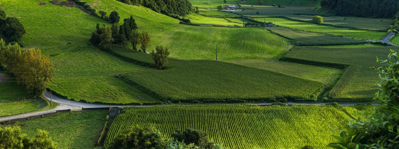 landscape-photography-of-green-grass-field-3013440-1.jpg
