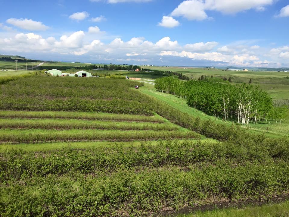 Our-Family-Farm.jpg
